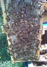 Gospodarstwo Pszczelarskie – Miody Ponidzia