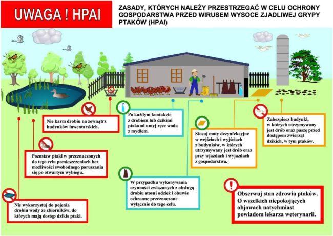 Komunikat Świętokrzyskiego Wojewódzkiego Lekarza Weterynarii dotyczący ryzyka wystąpienia grypy ptaków (HPAI)